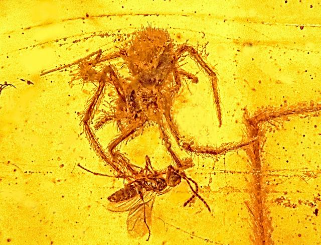 Επίθεση αράχνης από… το παρελθόν
