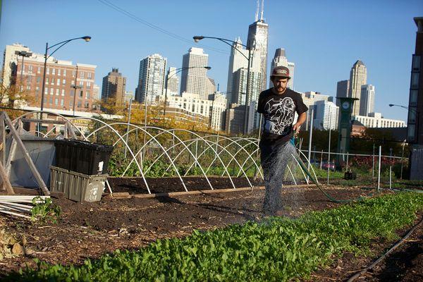 earth-day-urban-farming-chicago_51626_600x450