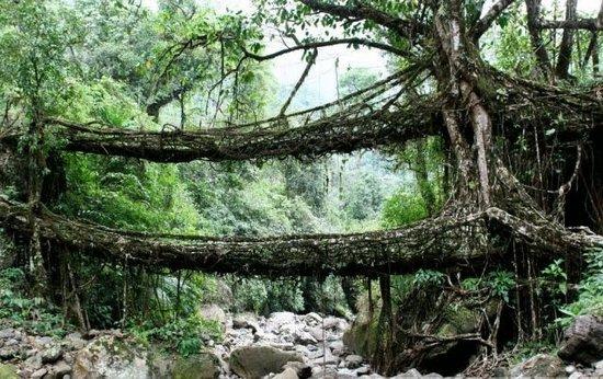 Ζωντανές Γέφυρες
