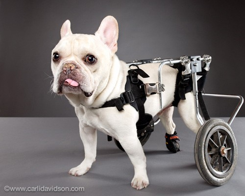 pets with disabilities1