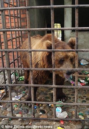 Μεθούσαν τις αρκούδες!