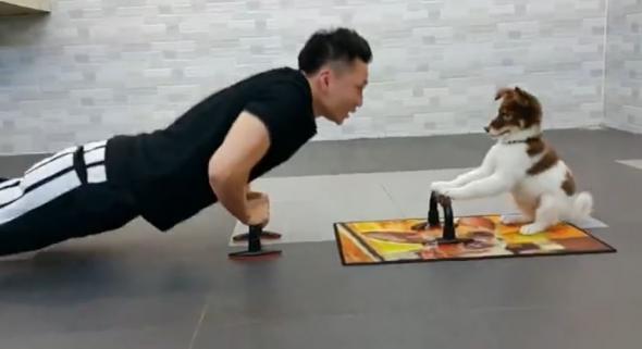 Το κουτάβι που γυμνάζεται με το αφεντικό του (Βίντεο)