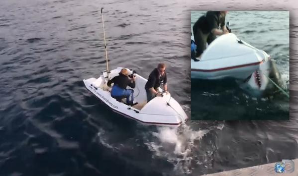 (VIDEO) Λευκός καρχαρίας επιτίθεται σε τηλεοπτικό συνεργείο!